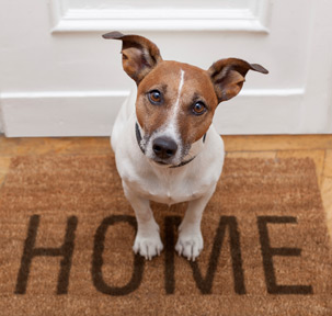 Pet dog home doormat